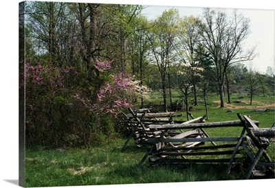 Flowering trees in bloom along fence line, spring, Great Smoky Mountains National Park, Tennessee