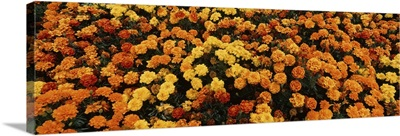 Flowers at Sequoia Park Humboldt Co Eureka  CA