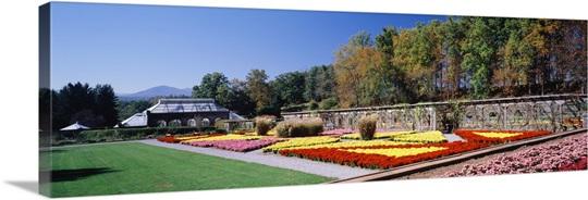 Flowers in a garden, Biltmore Estate, Asheville, North Carolina