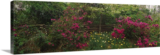 Flowers in a garden, Magnolia Plantation and Gardens, Charleston, South Carolina Wall Art