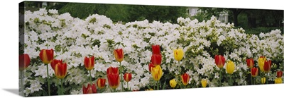 Flowers in a garden, Sherwood Gardens, Baltimore, Maryland