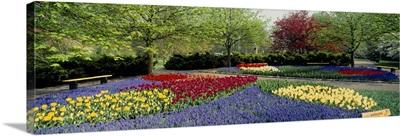 Flowers Keukenhof Park Netherlands