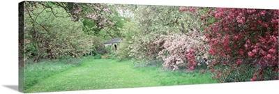 Flowers on a Cherry blossom tree, Thorpe Perrow, Arboretum, North Yorkshire, England