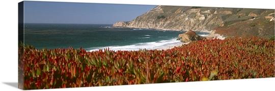 Flowers on the coast, Big Sur, California
