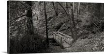 Footbridge in a forest, Cataract Falls Hiking Trail, Fairfax, Marin County, California