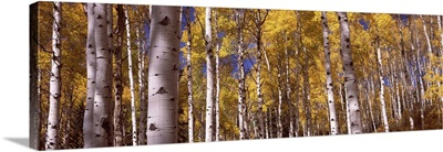Forest Grand Teton National Park Teton County Wyoming