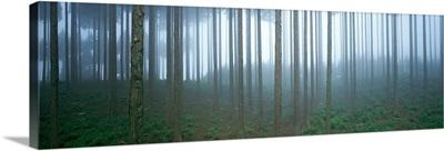 Forest in Fog Shizuoka Japan