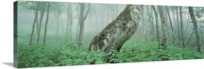 Forest Niigata Martsunoyama-cho Japan
