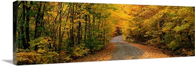 Forest Road near St. Hippolyte Laurentides Quebec Canada