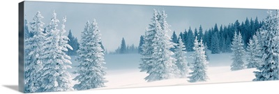 Fresh Snow on Pine Trees Taos County NM