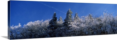 Frost on trees, Great Smoky Mountains National Park, Tennessee,