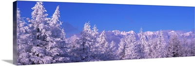Frost on Trees Northern Alps (Matsumoto ) Nagano Japan