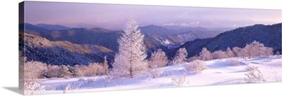 Frosted Trees (Utsukushigahara Plateau ) Nagano Japan