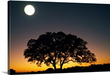 Full Moon Over Silhouetted Tree