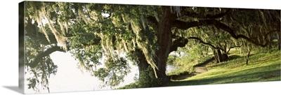 Garden at the riverside, Middleton Place, Charleston, Charleston County, South Carolina,