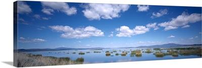 Grass in a wetland, Ash Creek State Wildlife Area, California