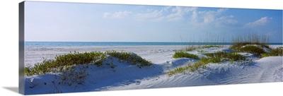 Grass on the beach, Lido Beach, Lido Key, Sarasota, Florida