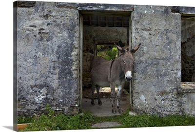 Great Blasket Island, County Kerry, Ireland