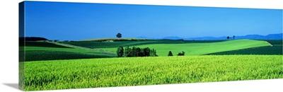 Green Field Japan