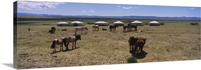 Group of horses and yurts in a field, Independent Mongolia