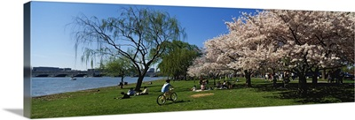 Group of people in a garden, Cherry Blossom, Washington DC