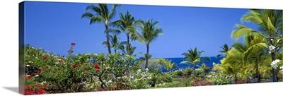 Hawaii, Kona Coast