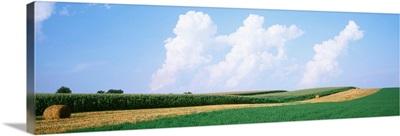 Hay bales in a field, Jo Daviess county, Illinois