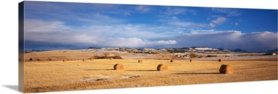 Hay bales in a field, Montana