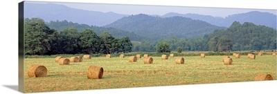 Hay bales in a field, Murphy, North Carolina