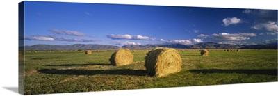 Hay bales in a field, Omarama, South Island, New Zealand
