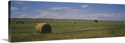 Hay bales in a field, Sundance, Idaho