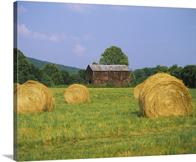 Hay bales in a field, Tennessee