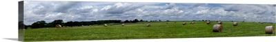 Hay bales in a field, Towanda, Mclean County, Illinois