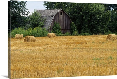 Hay bales in field, weathered barn, Michigan