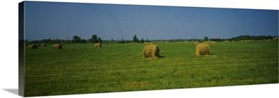 Hay bales on a field, Michigan