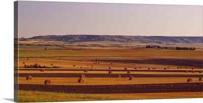 Hay Field ND