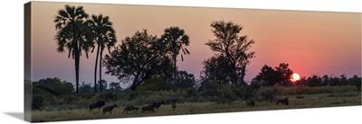 Herd of Bushbuck in a forest at dusk, Chitabe, Okavango Delta, Botswana