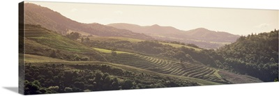 High angle view of a vineyard in a valley, Sonom, Sonoma County, California