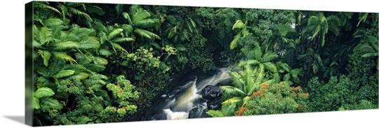 High angle view of a waterfall in a rainforest, Hamakua Coast, Hawaii