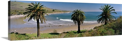 High angle view of palm trees on the beach, Refugio State Beach, California
