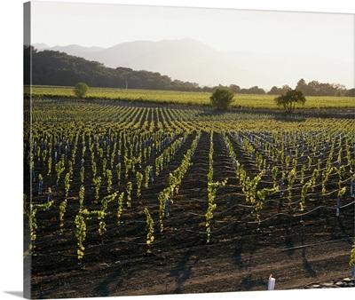 High angle view of vineyards, Napa Valley, Mayacamas Range, California