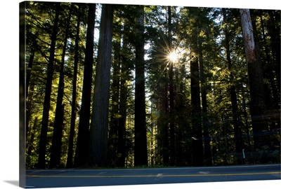 Highway passing through a redwood forest, US Route 101, Del Norte Coast Redwoods State Park, Del Norte County, California,