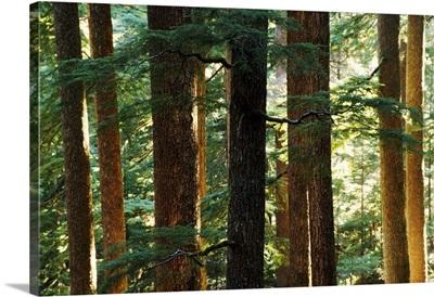 Hoh Rainforest Detail