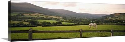 Horse in a field, Enniskerry, County Wicklow, Republic Of Ireland