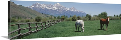 Horses and Teton Range Grand Teton National Park WY