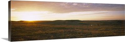 Horses in a field at sunset, North Dakota