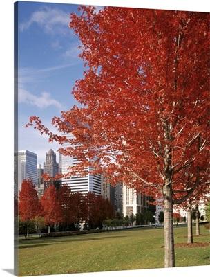 Illinois, Chicago, Millennium Park, Trees in a park during Autumn