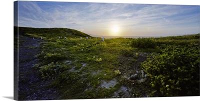 Island at dusk, Anacapa Island, Channel Islands National Park, California