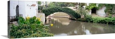 Ivy covering a foot bridge, San Antonio River, San Antonio River Walk, San Antonio, Texas