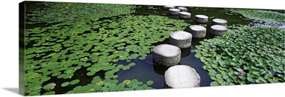 Japan, Kyoto, Helan Shrine, Water lilies in a pond